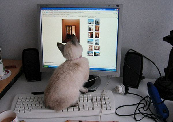 cats-love-computers-2