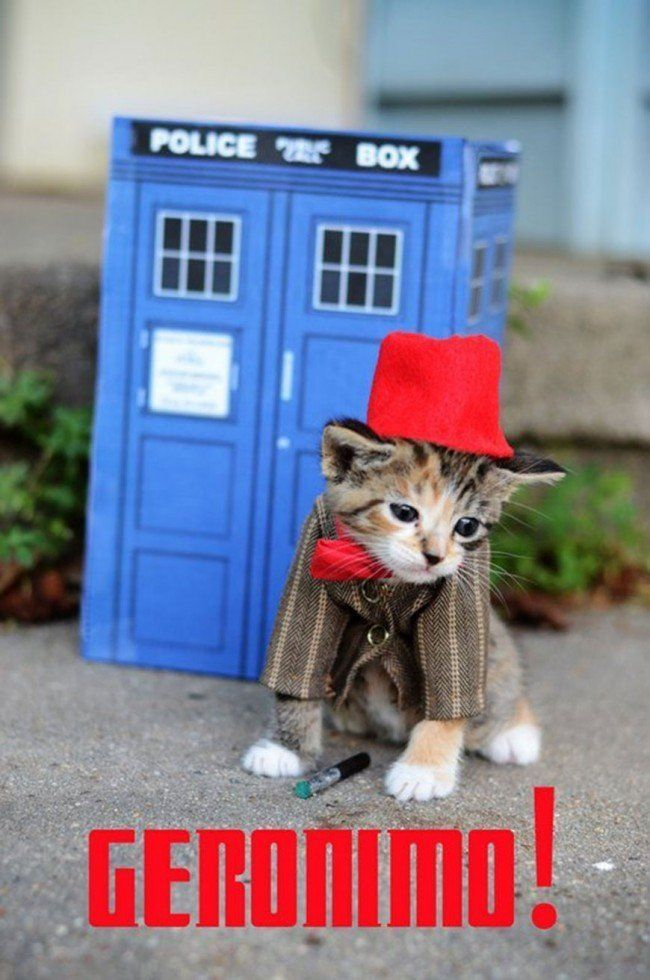 Si les héros de Game of Thrones, Star Wars ou Doctor Who étaient des chats ? #8