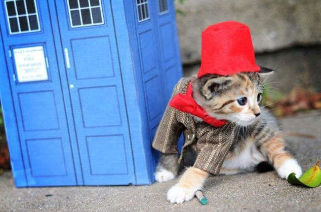 Si les héros de Game of Thrones, Star Wars ou Doctor Who étaient des chats ? #10