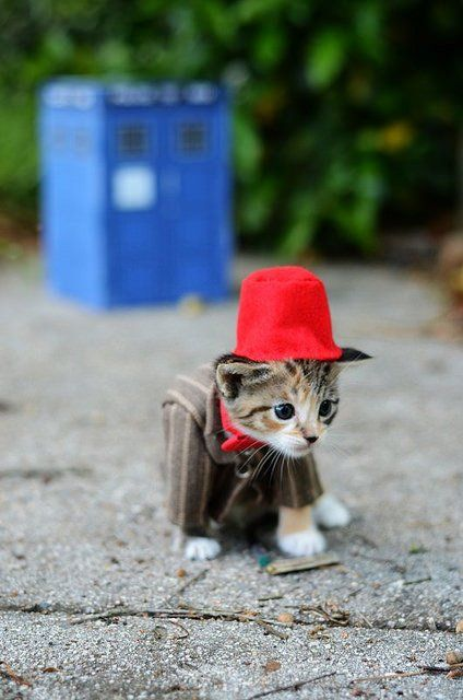 Si les héros de Game of Thrones, Star Wars ou Doctor Who étaient des chats ? #11