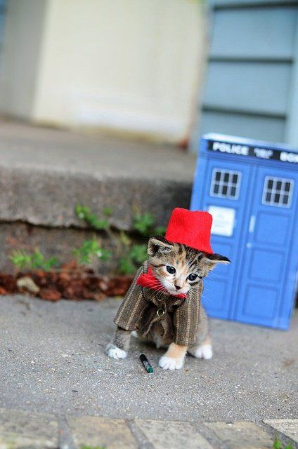 Si les héros de Game of Thrones, Star Wars ou Doctor Who étaient des chats ? #12