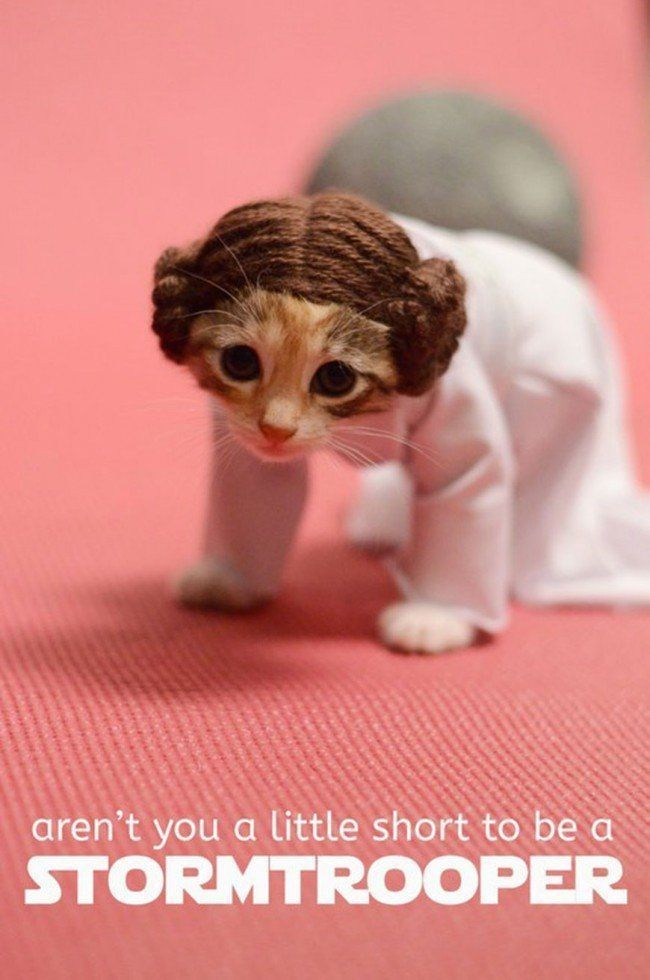 Si les héros de Game of Thrones, Star Wars ou Doctor Who étaient des chats ? #3