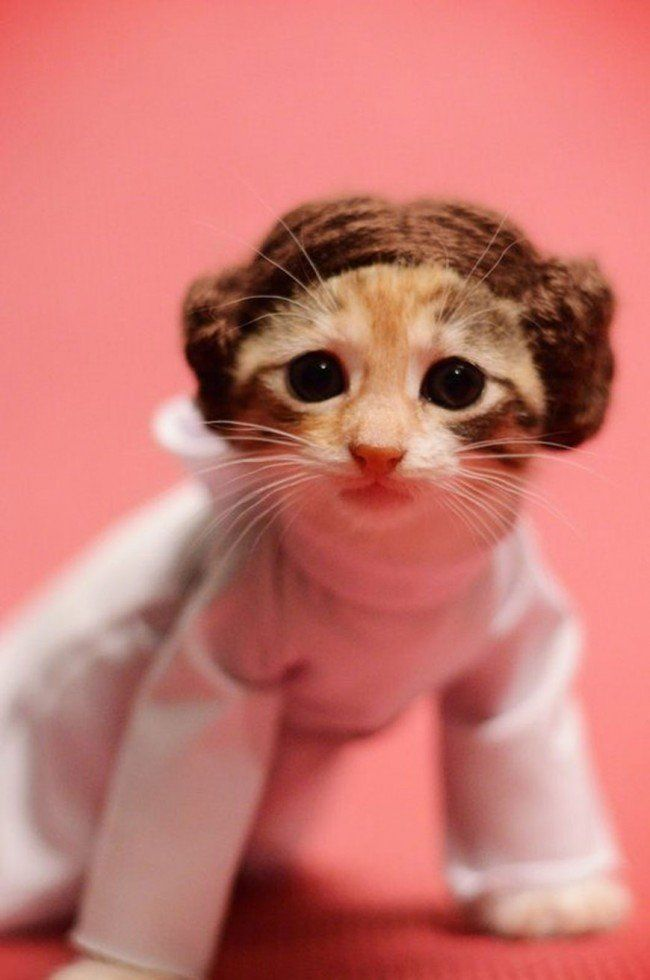 Si les héros de Game of Thrones, Star Wars ou Doctor Who étaient des chats ? #4