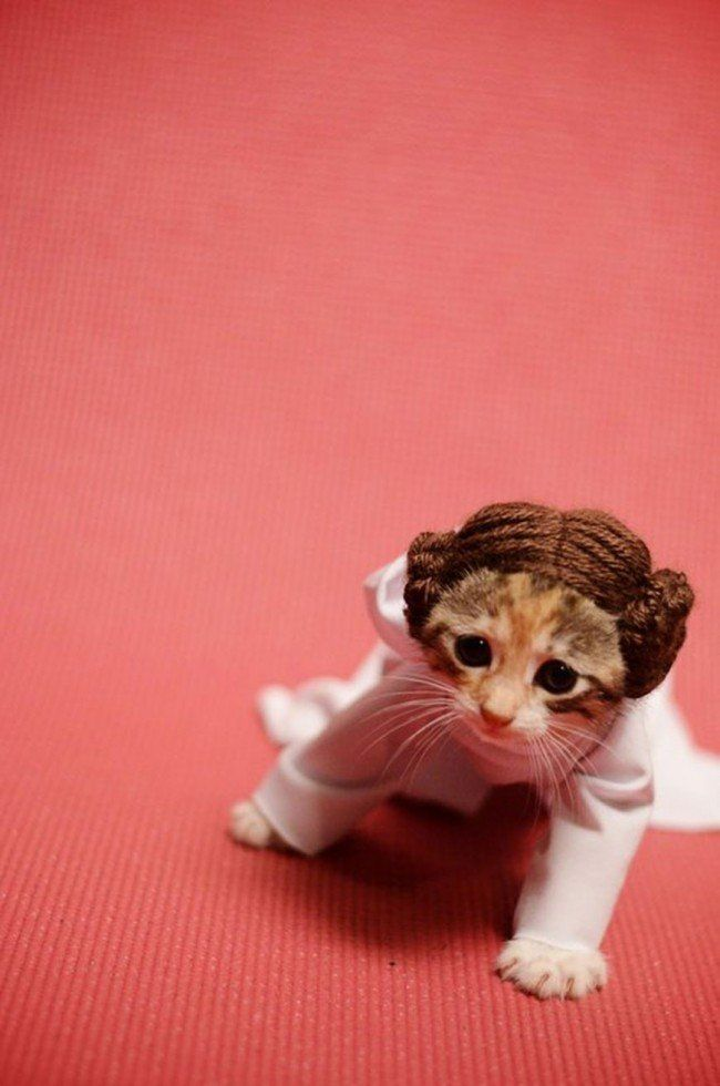 Si les héros de Game of Thrones, Star Wars ou Doctor Who étaient des chats ? #5
