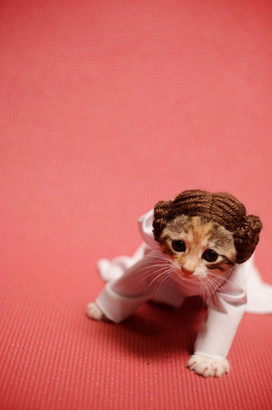 princesse-leia-chat-3
