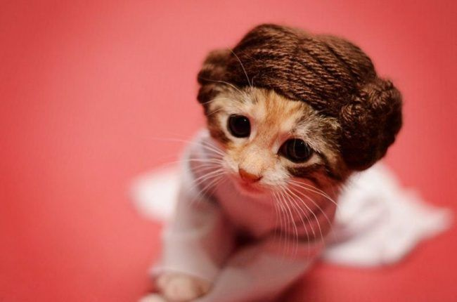 Si les héros de Game of Thrones, Star Wars ou Doctor Who étaient des chats ?