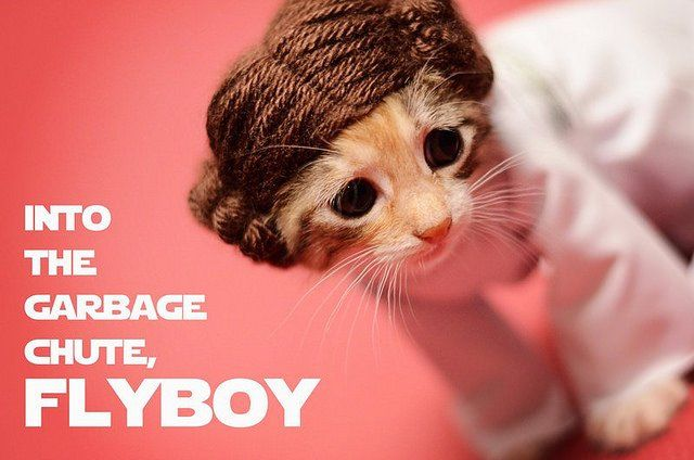 Si les héros de Game of Thrones, Star Wars ou Doctor Who étaient des chats ? #2